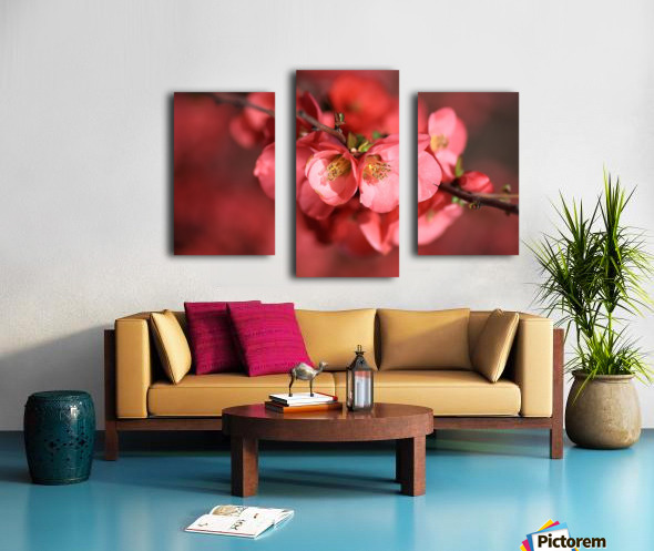 Flowering Quince Of Spring Canvas print