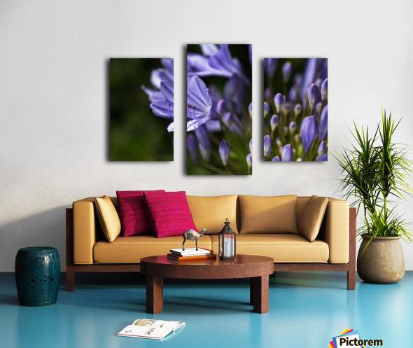 Agapanthus Blue Canvas print