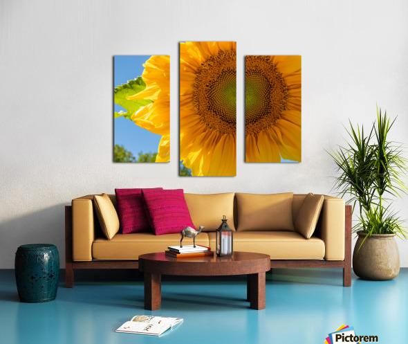 Sunflower 10 Canvas print