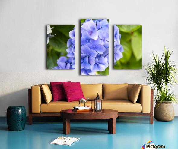 IMGP4936 Canvas print