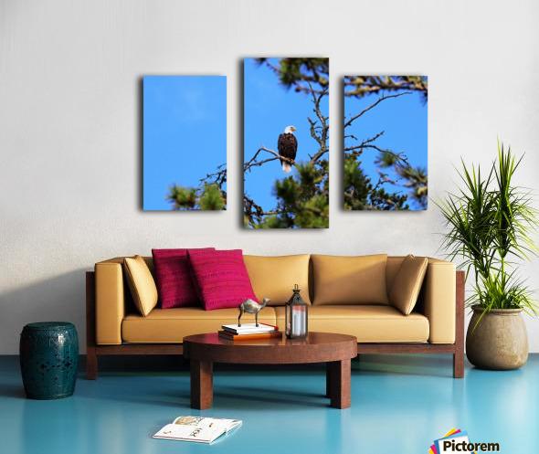 Bald Eagle Looking Regal Canvas print