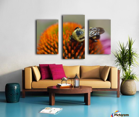 Purple Coneflower with bee Canvas print