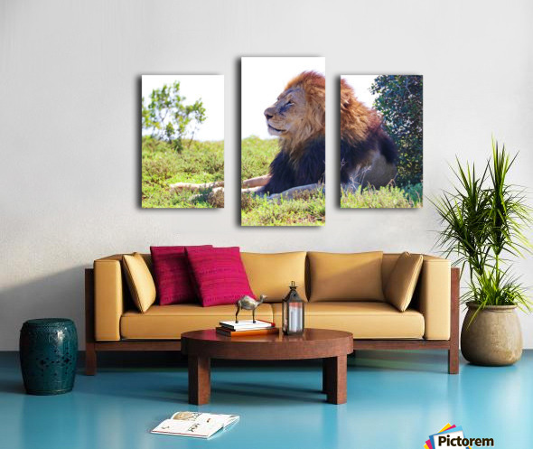Lion Male in Addo 9240 Canvas print