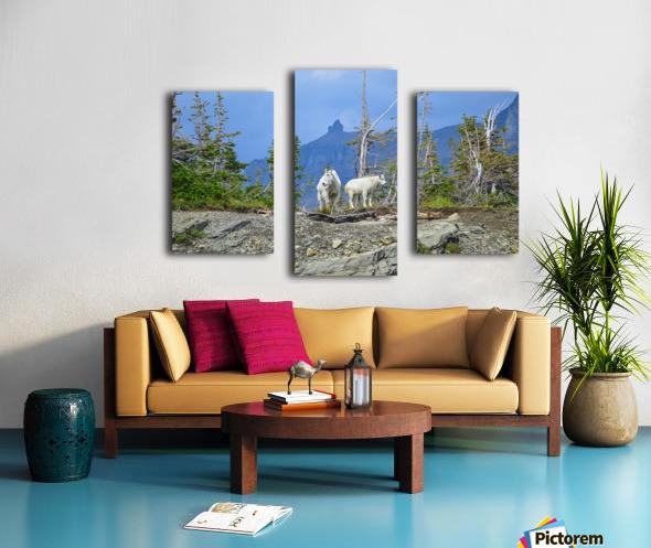 Mountain Goats at Logan Pass Canvas print