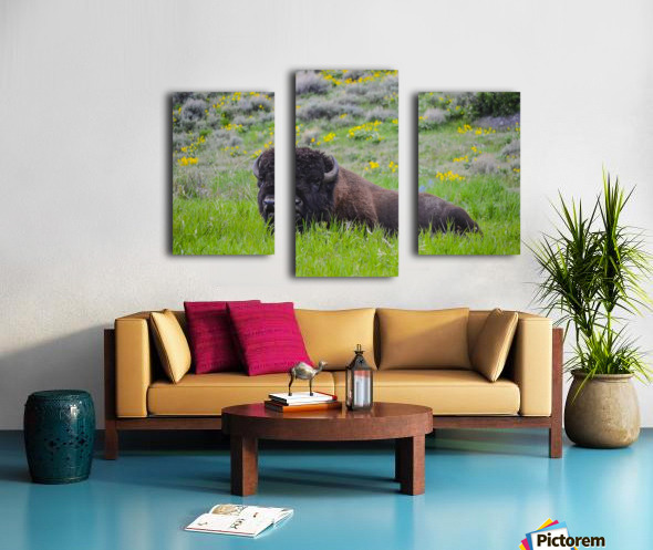 Bison in Wildflowers Canvas print
