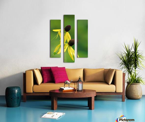 Great Coneflower Canvas print