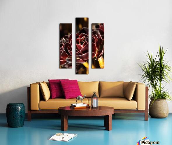 Purple Aeonium Succulent Canvas print