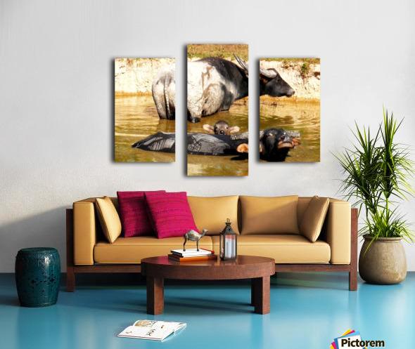 Water Buffalo Family Portrait Canvas print