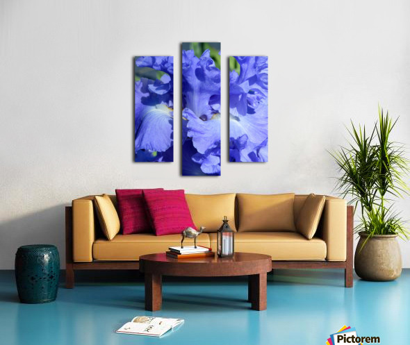 Metoleus Blue Bearded Iris Canvas print