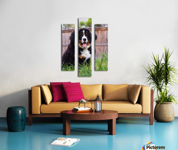Bernese Mountain Dog Puppy 1 Canvas print