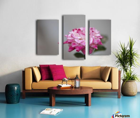 Desert rose Canvas print