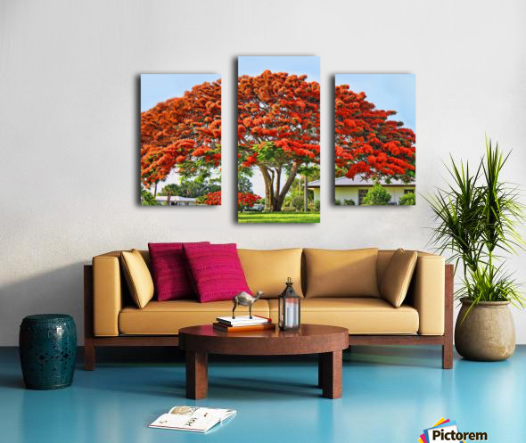 Royal Poinciana Tree Canvas print