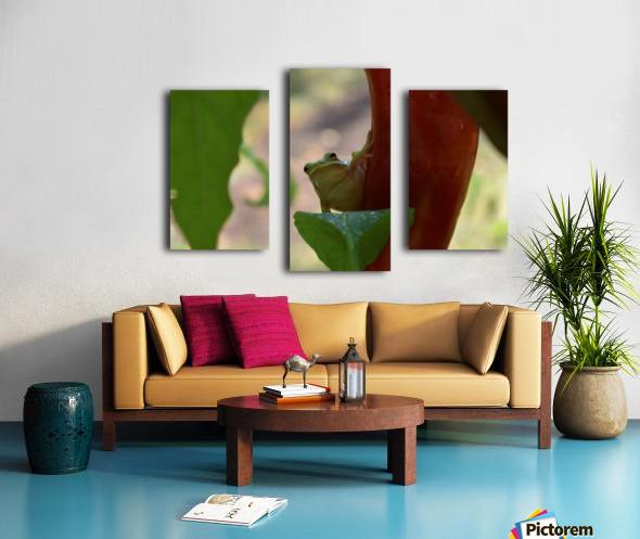 Peeping Frog Canvas print