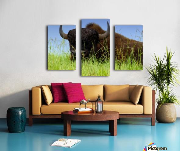 Female Bison Canvas print
