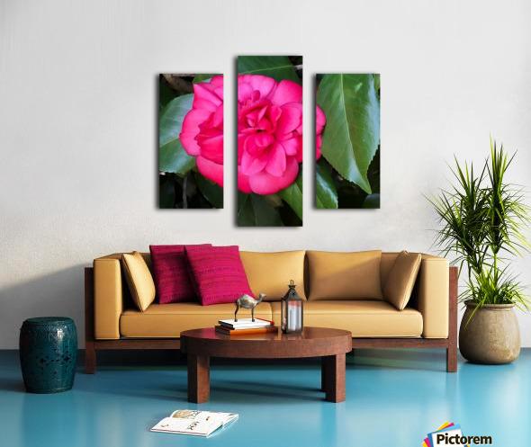Japanese Camellia Canvas print