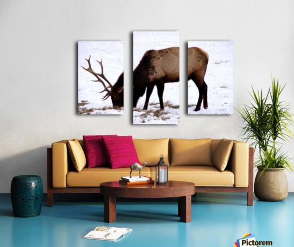 Elk in Wyoming Canvas print