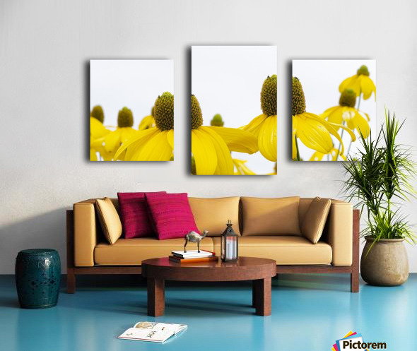 Sunshine Panorama Canvas print