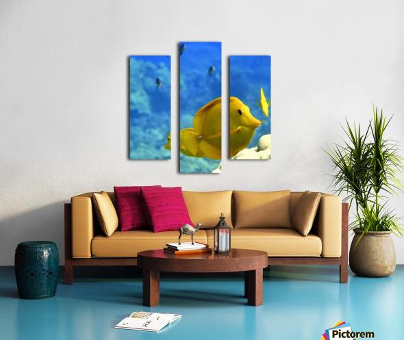 Yellow  a yellow tang  Canvas print