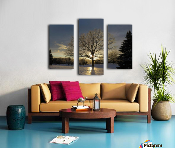 Winter Oak Canvas print