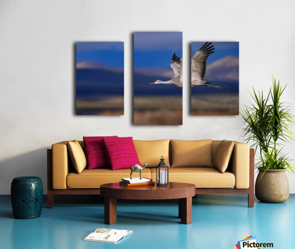Crane over the Bosque Canvas print