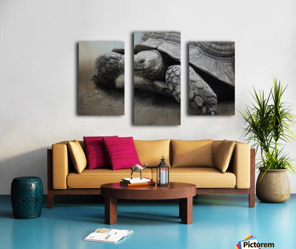 Galapagos Gentle Giant  Canvas print