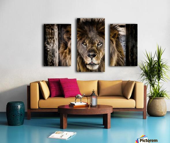A Regal Lion Canvas print