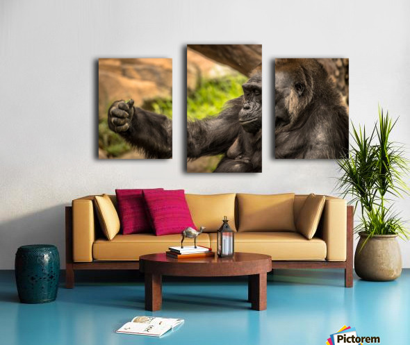 Quiet Gorilla Sleeping Canvas print