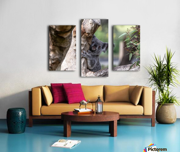 Australias Own Koala Bear Canvas print