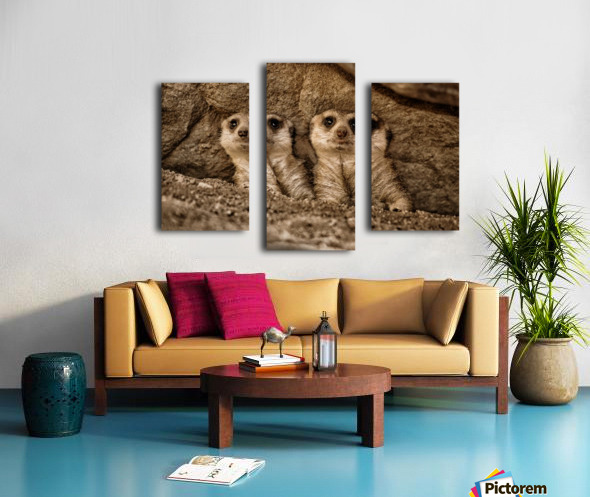 The Meerkat Twins Canvas print