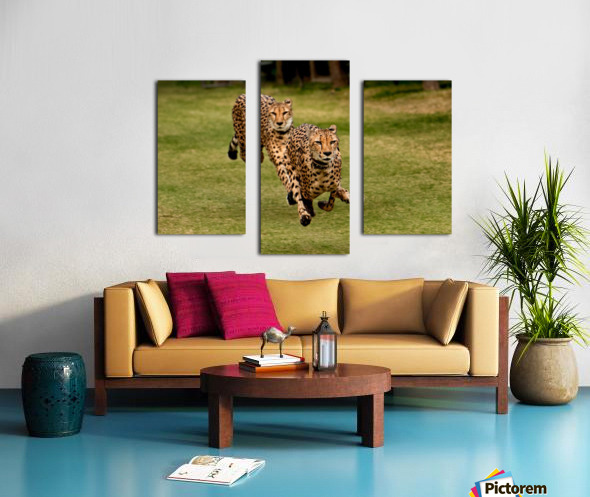 The Cheetah Brothers Canvas print