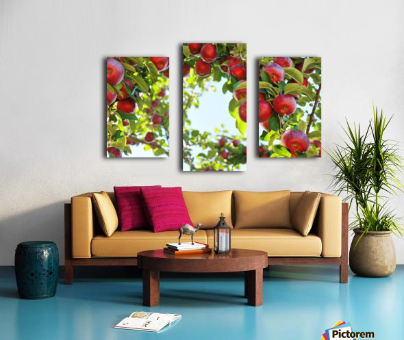 Apples Orchard- Harvest Canvas print