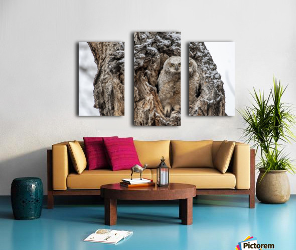 Great Horned Owlet - Can I come out yet Canvas print
