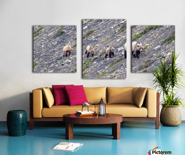 Grizzly Bear Family - Walk this way. Canvas print
