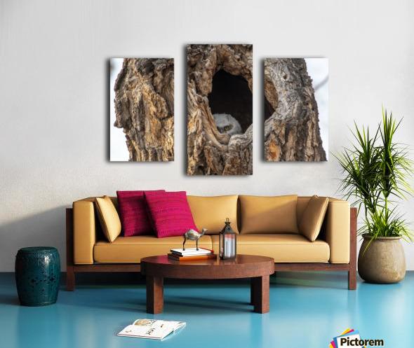 Great Horned Owl - Peek a boo Canvas print