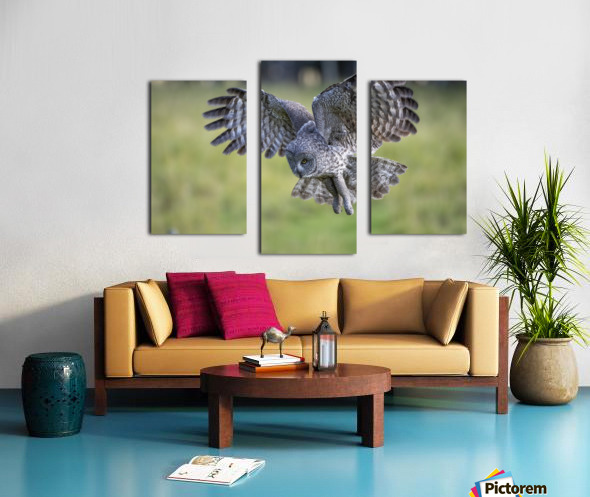 Great Grey Owl - Incoming Canvas print