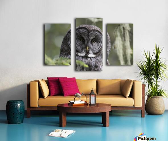 Great Grey Owl - Eye to Eye Canvas print