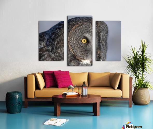 Great Grey Owl up Close Canvas print