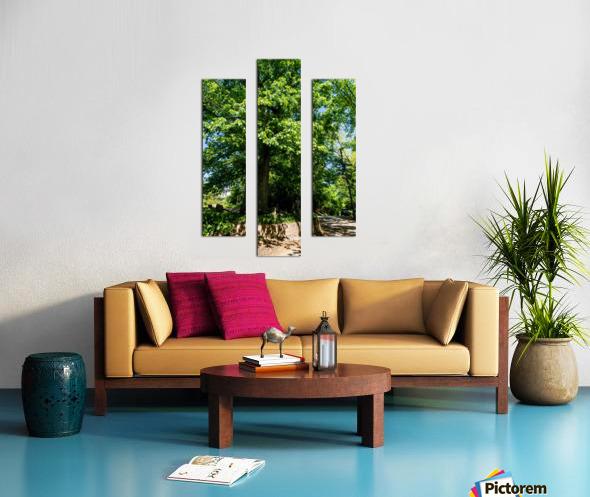 Tree Than Owns Itself   Athens GA 06567 Canvas print
