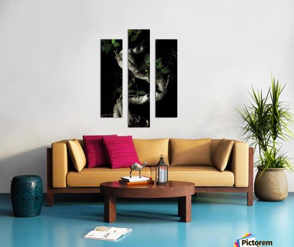 old bonsai black background Canvas print