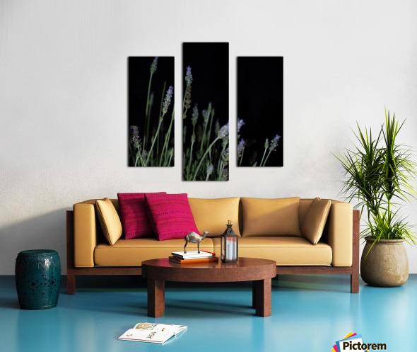 plant flower lavender black background Canvas print