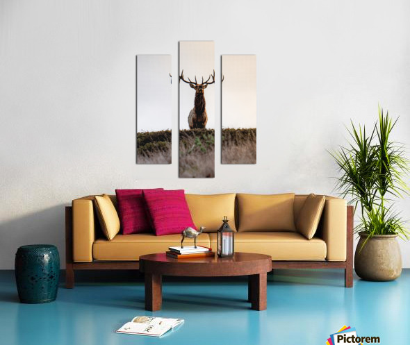 Tule Elk On Top Of A Hill Canvas print