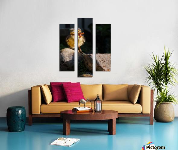 Quacking Duckling Canvas print