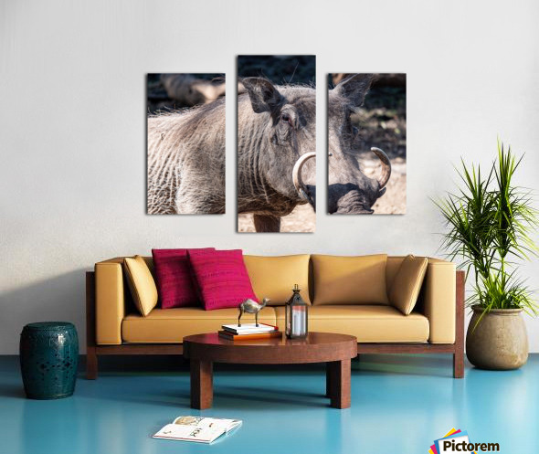 Warthog Close Up Canvas print