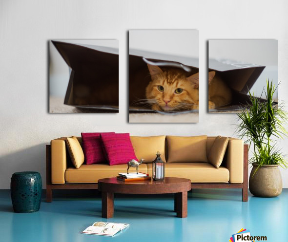 Cat In The Bag Impression sur toile