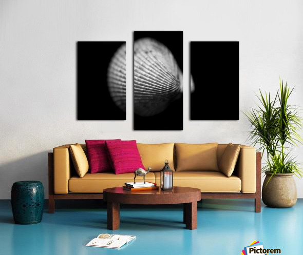 Series of shells  Canvas print