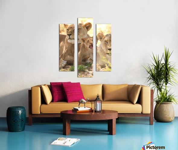 AdriaanPrinsloo 6659 Canvas print