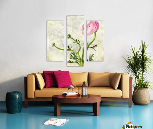 Pink buttercup Canvas print