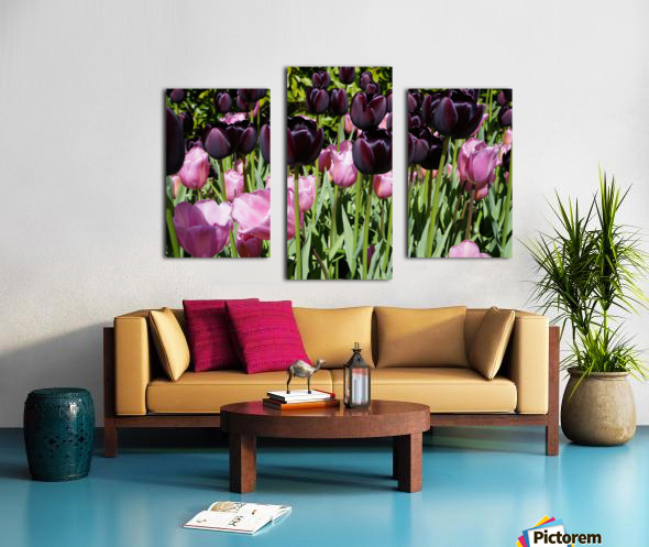 Spring Blooms of Holland 5 of 8 Canvas print
