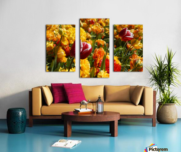 Spring Blooms of Holland 7 of 8 Canvas print