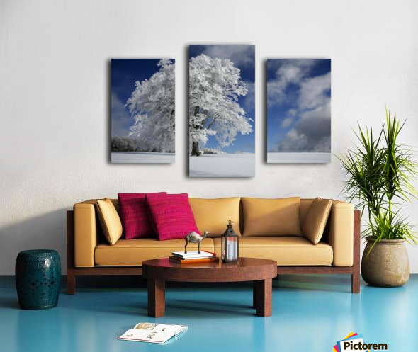 White Windbuche in Black Forest Canvas print